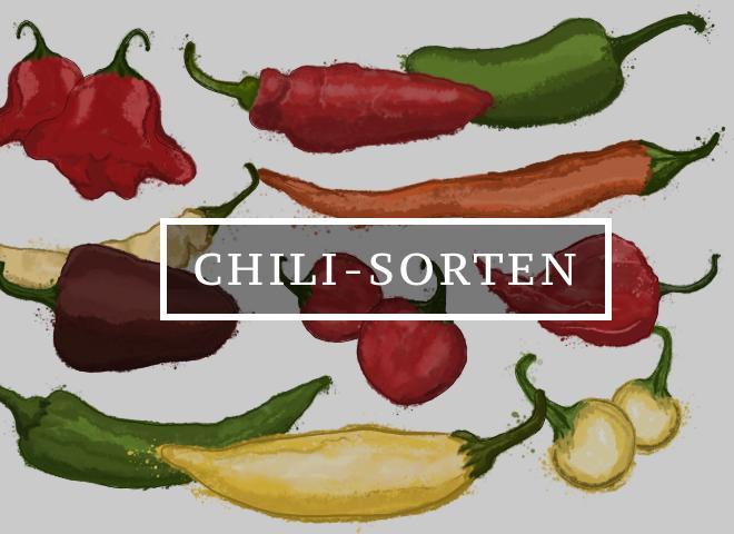 Chili Sorten im Überblick